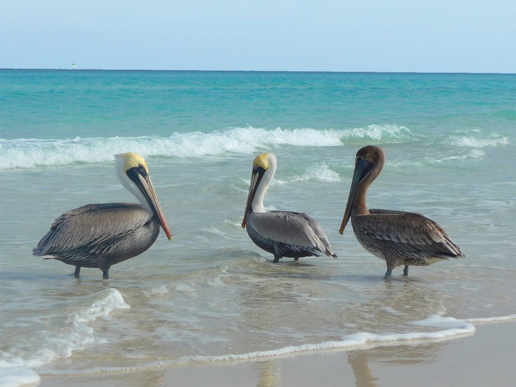Egzotyczny rejs morski na Kubie